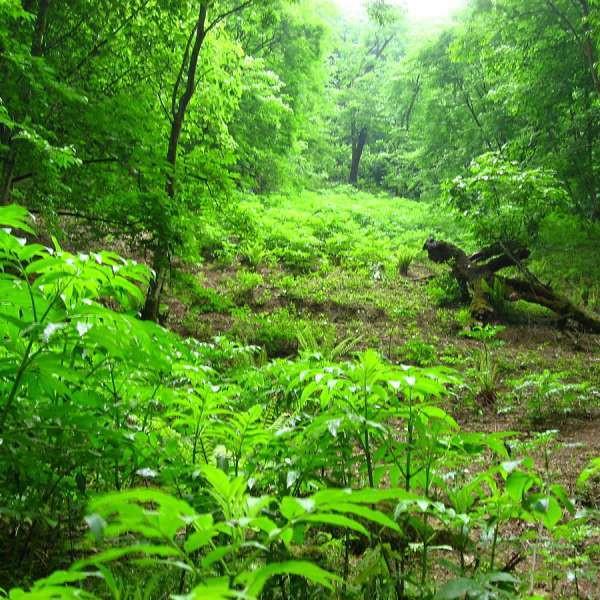 بشر دوباره به جنگل پناه خواهد برد